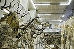 Museum voor Dierkunde 2010PM 0363 21H7449.JPG