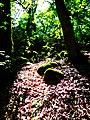 Mysterious forest near of Maralgol lake.jpg