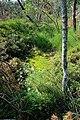 ND-00108 Lkr. Traunstein Gemeinde Surberg Bild B.jpg