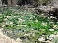Nacimiento del Río Cuervo laguna.JPG