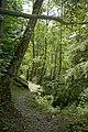 Natur in der Rabischschlucht 20190819 035.jpg