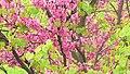 Natural colors - panoramio (1).jpg