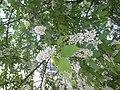 Nature in Smolensk - 56.jpg