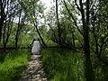 Naturschutzgebiet Heuckenlock 21.05.2014 Phase 64.JPG