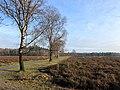 Netherlands, Veluwe (4), Heerde, Renderklippen.jpg
