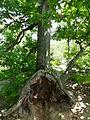 Neuer Wildenstein - Nationalpark Sächsische Schweiz 11.JPG