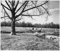 Newberry County, South Carolina. Land Cultivation. (No detailed description given.) - NARA - 522715.tif