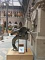 Newton and Deinotherium giganteum.jpg