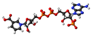 Ball-and-stick model of the NAADP molecule