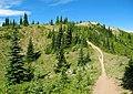 Noble Knob trail.jpg