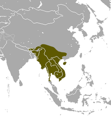 Northern Treeshrew area.png