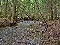 Nottawasaga River tributary.jpg
