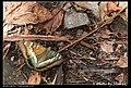 Nymphalidae (5968932557).jpg