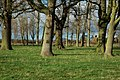 Oak trees in parkland near the Nash - geograph.org.uk - 630079.jpg
