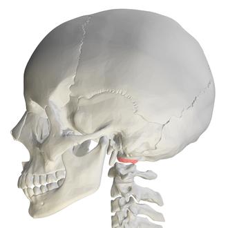 Occipital condyles - Image: Occipital condyle 08