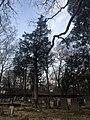 Old Chapel Tree.jpg