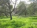 Orchard, Ashford Carbonel - geograph.org.uk - 1470538.jpg