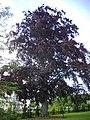 Orléans - jardin des plantes (40).jpg