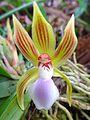 Orquidea 3.jpg