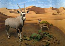 Oryx and antelope in the Namibian desert.jpg