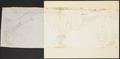 Otaria hookeri - skelet - 1700-1880 - Print - Iconographia Zoologica - Special Collections University of Amsterdam - UBA01 IZ21100055.tif