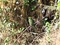 Otvane Wildlife Animal 09.JPG