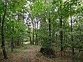 Přírodní park Škvorecká obora-Králičina - lesy východně od sídliště Rohožník a severně od Květnické studánky (4).JPG