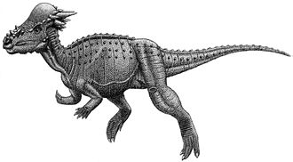 Cerapoda - Image: Pachycephalosauria jmallon