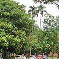 Palma Sancona en la Universidad del Valle.jpg