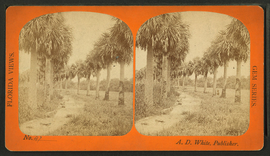 File:Palmetto Avenue, Fort George, Fla, from Robert N. Dennis ...
