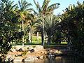 Palmetum Tenerife zona Madagascar..JPG