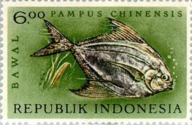 Pampus chinensis 1963 Indonesia stamp.jpg