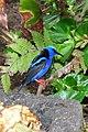 Panama boquete (9900152083).jpg