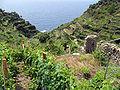 Panorama agricole delle Cinque Terre.jpg