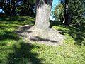 Parc La Fontaine 25.jpg