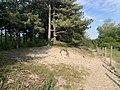 Parc Marquenterre - Saint-Quentin-en-Tourmont (FR80) - 2021-05-29 - 3.jpg