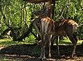 """Parcul de Animale - """"Moara de Vant"""" (7403389750).jpg"""