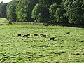 Parkland, Abercorn. - geograph.org.uk - 58418.jpg