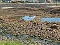 Parklands fish trap 20201025-002.jpg