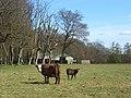Pasture, barn and woodland. Park Corner - geograph.org.uk - 755003.jpg