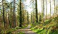 Path, Castlewellan Forest Park (1) - geograph.org.uk - 1246383.jpg