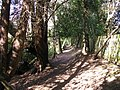Path at Ludgrove - geograph.org.uk - 1219286.jpg