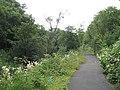 Path beside the Luggie Burn - geograph.org.uk - 1221018.jpg