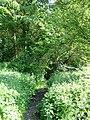 Path into Park Wood - geograph.org.uk - 183953.jpg