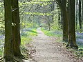 Path through West Woods near Marlborough - geograph.org.uk - 409295.jpg