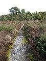 Path through open heathland - geograph.org.uk - 1018346.jpg