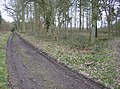 Paths in Greathouse Wood - geograph.org.uk - 358431.jpg