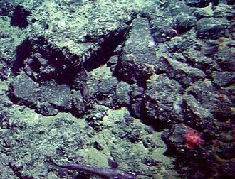 Patton Seamount - Segmented basalt on Patton Seamount. A small coral and squid can also be seen, to the lower right.