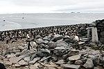 Paulet Island (24259767319).jpg