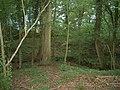 Pear Tree Copse - geograph.org.uk - 530053.jpg